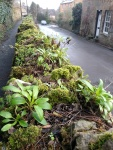 The sidewalk (pavement) was above the street here - I loved the plants growing on the wall!